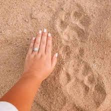 Tracking lions!