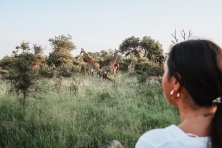 Morning giraffe viewing